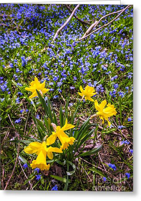March Greeting Cards - Spring wildflowers Greeting Card by Elena Elisseeva