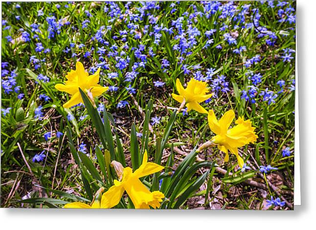 Spring wildflowers Greeting Card by Elena Elisseeva