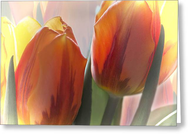 Barbara Smith Greeting Cards - Spring Will Come Greeting Card by Barbara Smith