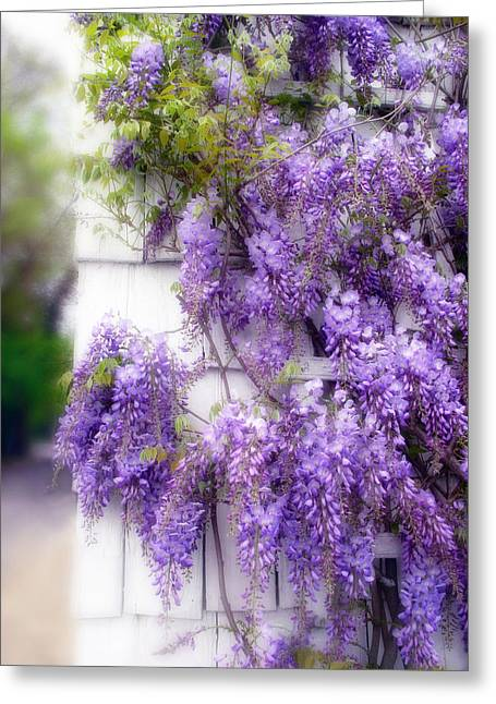 Climbing Digital Greeting Cards - Spring Wisteria Greeting Card by Jessica Jenney