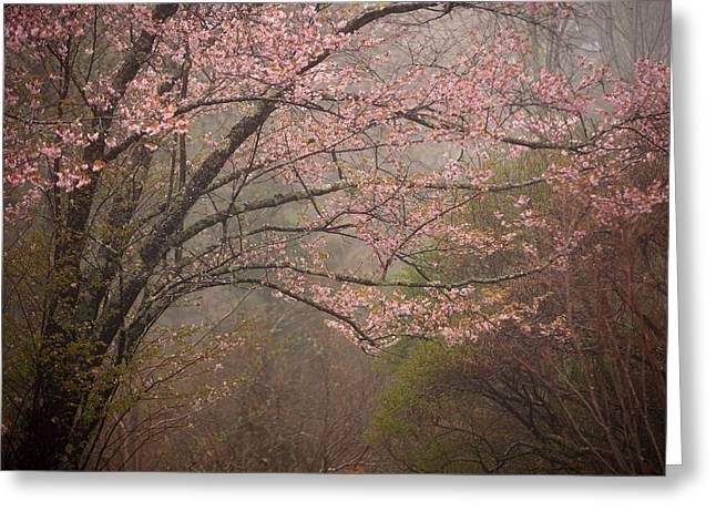 Maine Spring Greeting Cards - Spring Woods Greeting Card by Patrick Downey