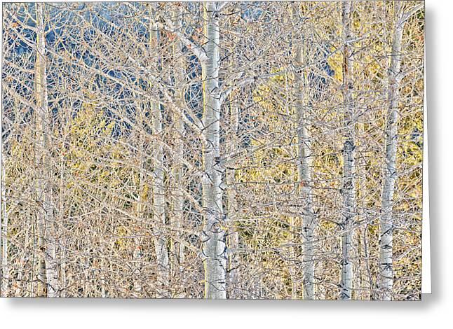 Merrit Greeting Cards - Spring Woods Greeting Card by Paul W Sharpe Aka Wizard of Wonders