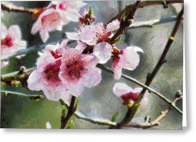 Anthony J Caruso Greeting Cards - SpringBlossoms Greeting Card by Anthony Caruso