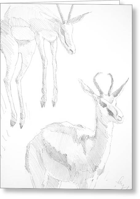 Pronk Greeting Cards - Springbok jumping drawing Greeting Card by Mike Jory