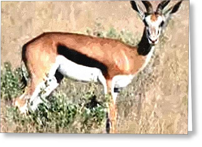 Cellphone Greeting Cards - SPRINGBUCK H a Greeting Card by Gert J Rheeders