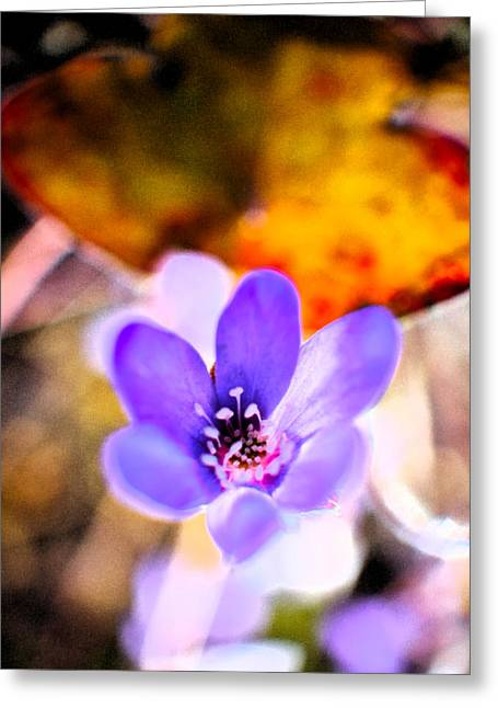 Springdreams Greeting Card by Jouko Lehto