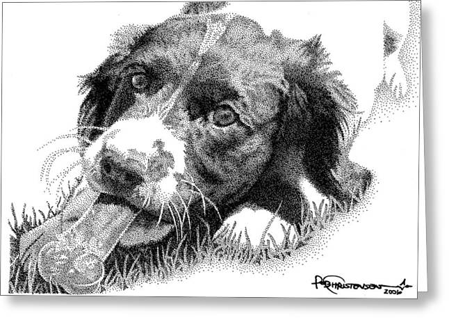 Puppies Drawings Greeting Cards - Springer Puppy Greeting Card by Rob Christensen