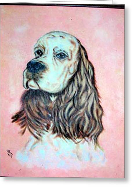 Pat Mchale Greeting Cards - Springer Spanial Greeting Card by Pat Mchale