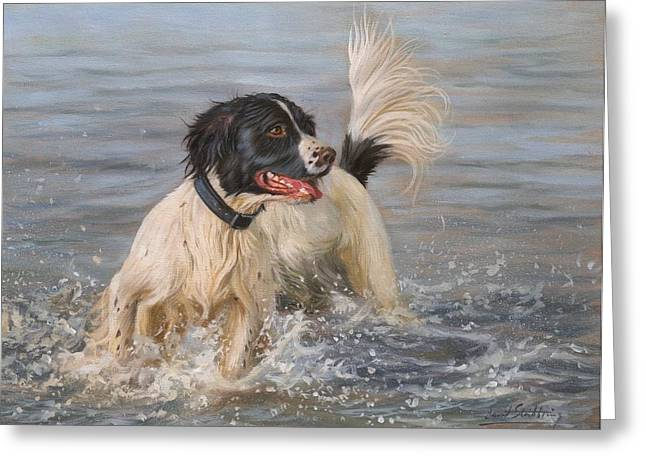 Spaniel Greeting Cards - Springer Spaniel Greeting Card by David Stribbling
