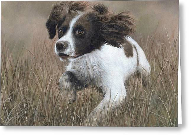 Spaniel Greeting Cards - Springer Spaniel Painting Greeting Card by Rachel Stribbling