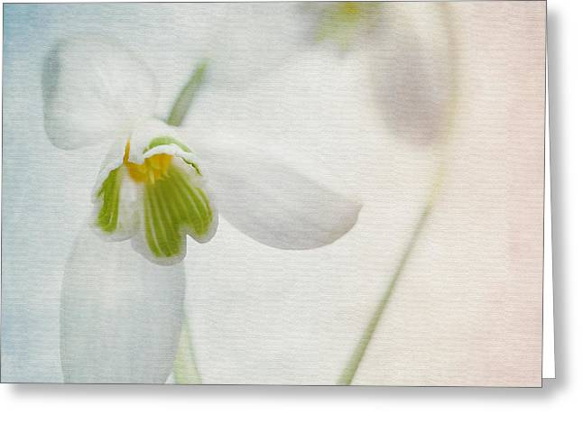 Decorativ Photographs Greeting Cards - Springflower Greeting Card by Annie  Snel