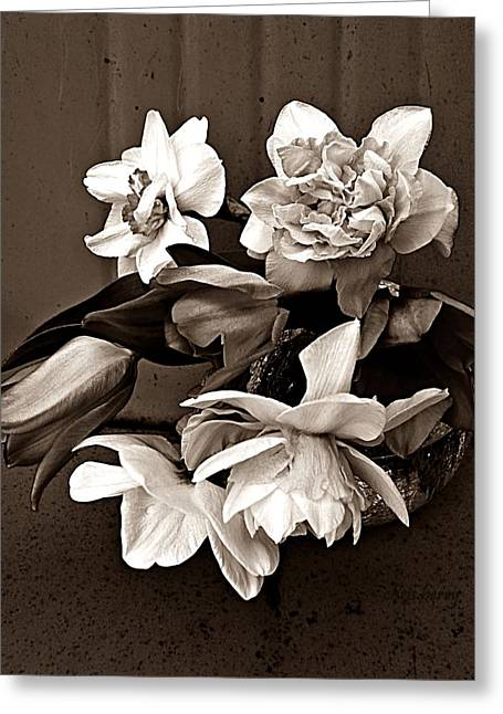 Hardy Amaryllis Greeting Cards - Springs Bounty Greeting Card by Chris Berry