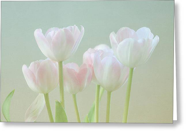 Kim Photographs Greeting Cards - Springs Pastels Greeting Card by Kim Hojnacki