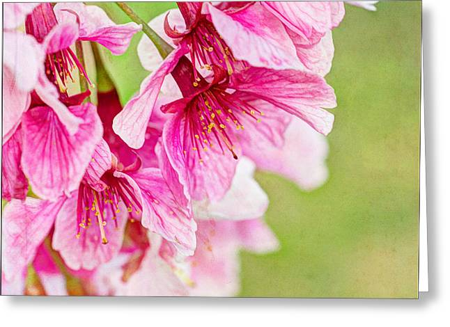 Pink Flower Branch Greeting Cards - Springs Show - Square  Greeting Card by Heidi Smith