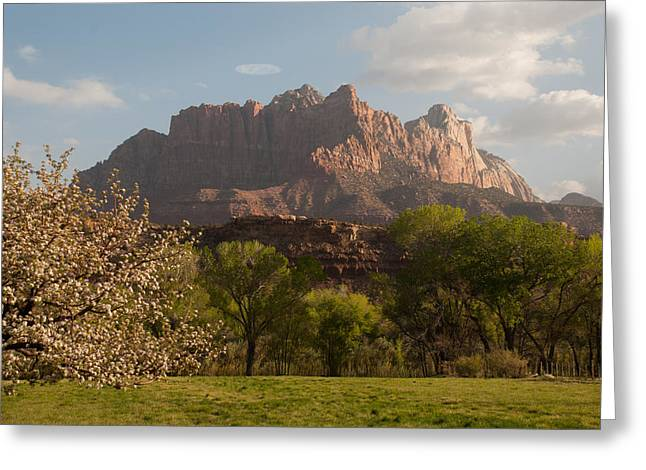 Geobob Greeting Cards - Springtime and Mount Kinesava Zion National Park Rockville Utah Greeting Card by Robert Ford