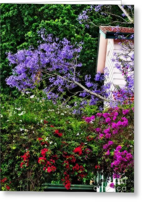 Jacaranda Greeting Cards - Springtime Beauty - Urban Scene Greeting Card by Kaye Menner