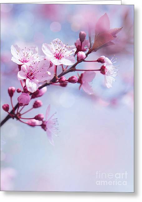 Fruit Tree Art Greeting Cards - Springtime blooming tree background Greeting Card by Anna Omelchenko