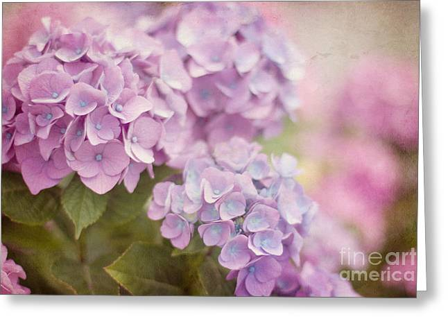 A New Focus Photography Greeting Cards - Springtime Blooms Greeting Card by A New Focus Photography