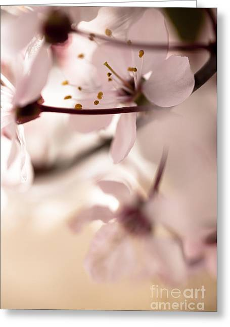 Pale Pink Greeting Cards - Springtime Blossom Greeting Card by Jan Bickerton