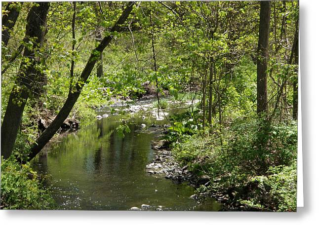 Wellspring Greeting Cards - Springtime by the Creek Greeting Card by Diane Buccheri