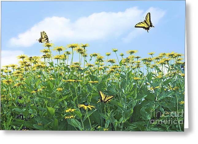 Swallowtail Greeting Cards - Springtime Greeting Card by Diane Diederich