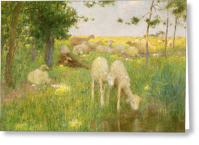 Sheep Paintings Greeting Cards - Springtime Greeting Card by Edward Stott