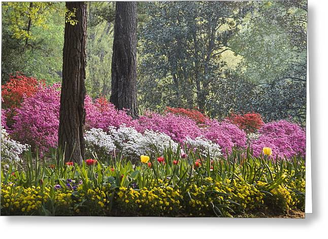 Chatham County Greeting Cards - Springtime Greeting Card by Eggers   Photography