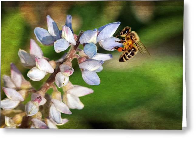 Renewing Greeting Cards - Springtime I Greeting Card by Dawn Currie