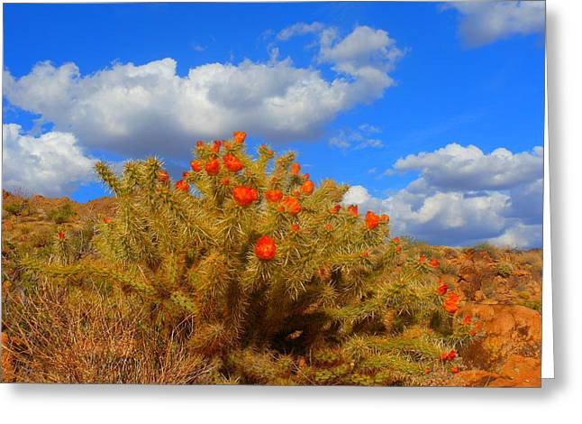 Springtime In Arizona Greeting Card by James Welch