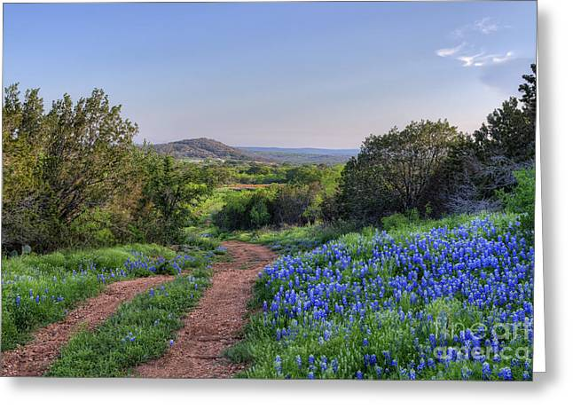 Blue Bonnets Greeting Cards - Springtime in the Hill Country Greeting Card by Cathy Alba