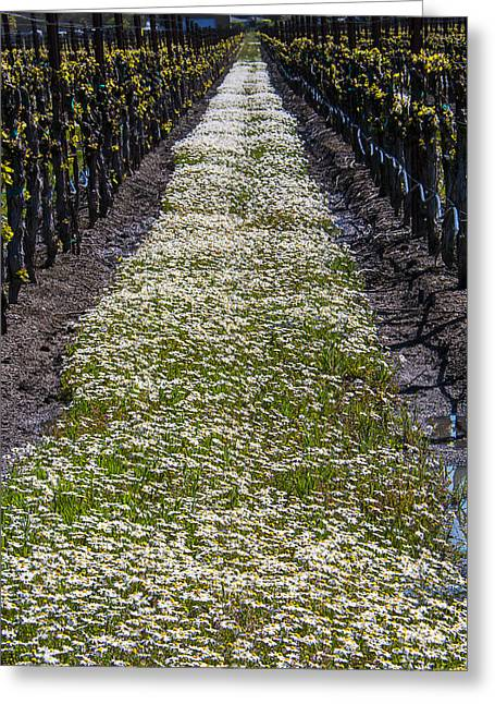 Ground Cover Greeting Cards - Springtime In The Vineyards Greeting Card by Garry Gay