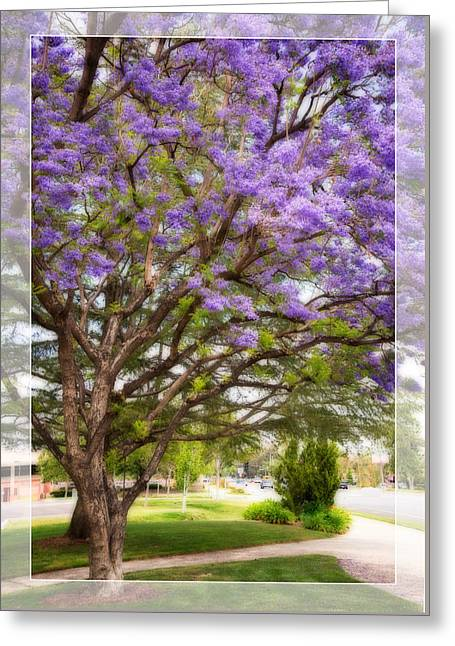 Ventura California Greeting Cards - Springtime Jacaranda Tree Greeting Card by Lynn Bauer
