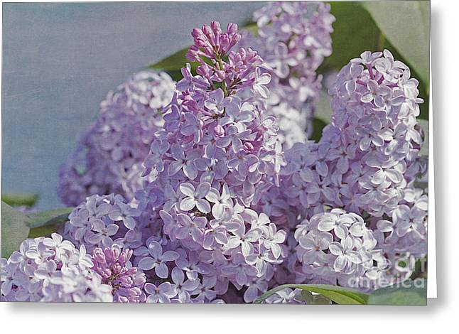 Vulgaris Greeting Cards - Springtime Lilacs Greeting Card by Cindi Ressler
