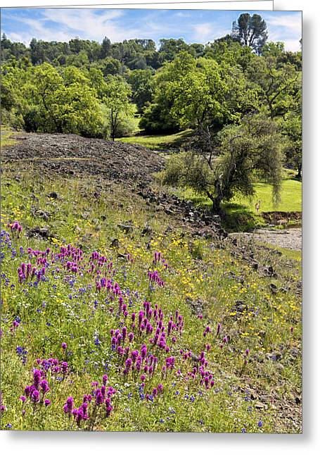 Springtime On Table Mountain Greeting Card by Kathleen Bishop