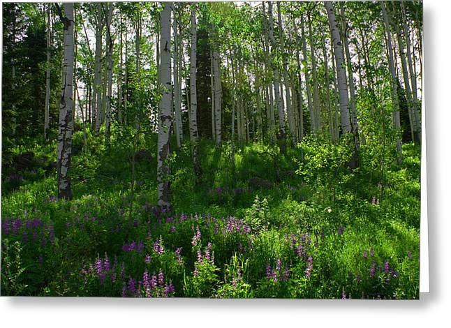 Quaking Aspen Greeting Cards - Springtime on the Grand Mesa Greeting Card by Ernie Echols