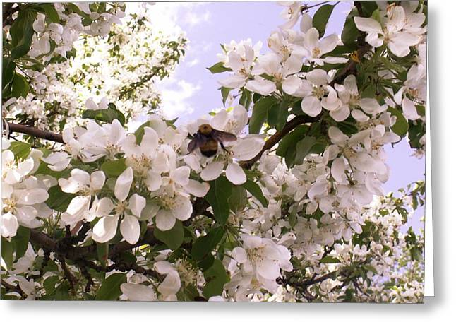 Apple Pyrography Greeting Cards - Springtime Greeting Card by Rebecca Wenger