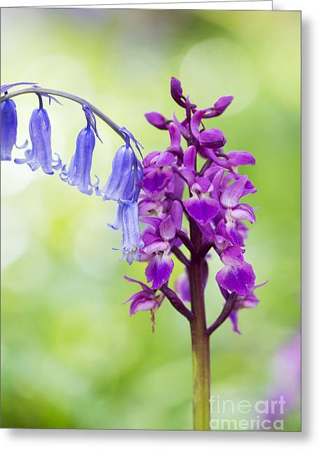 Purple Orchids Greeting Cards - Springtime Greeting Card by Tim Gainey