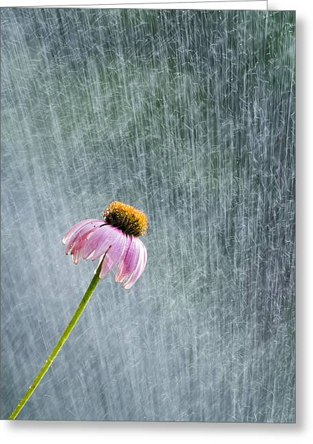 Aunts Greeting Cards - Sprinkler Bloom Greeting Card by Nathaniel Kidd