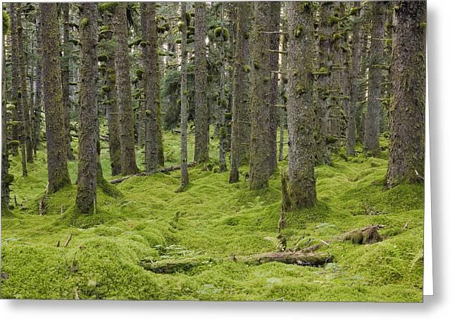 Kodiak Island Greeting Cards - Spruce Forest & Moss Near Coast Kodiak Greeting Card by Kevin Smith