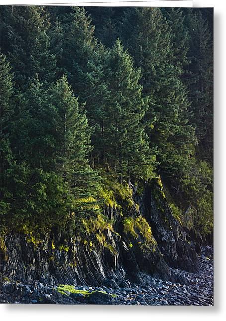 Kodiak Island Greeting Cards - Spruce Tree Forest, Chiniak Bay, Kodiak Greeting Card by Kevin Smith