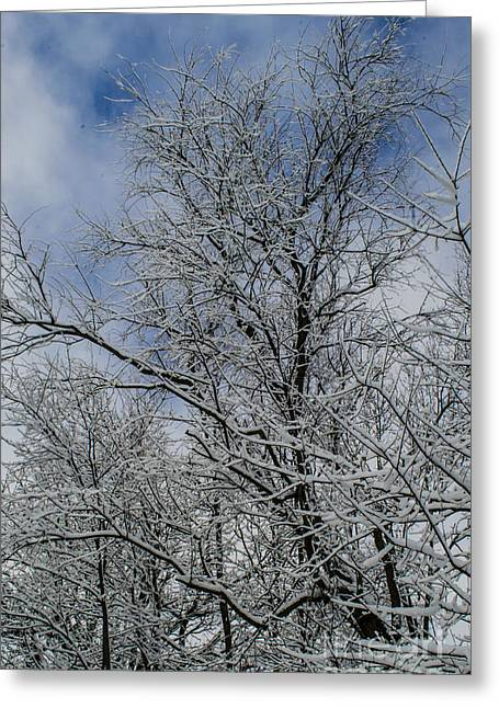Winter Storm Nemo Greeting Cards - Spun Sugar Trees Made by Nemo Greeting Card by Deborah Smolinske