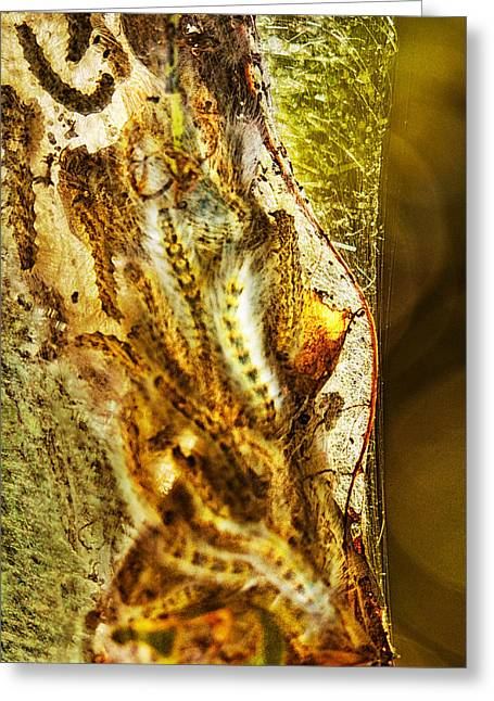 Cocoon Greeting Cards - Spunsilk Greeting Card by Susan Capuano