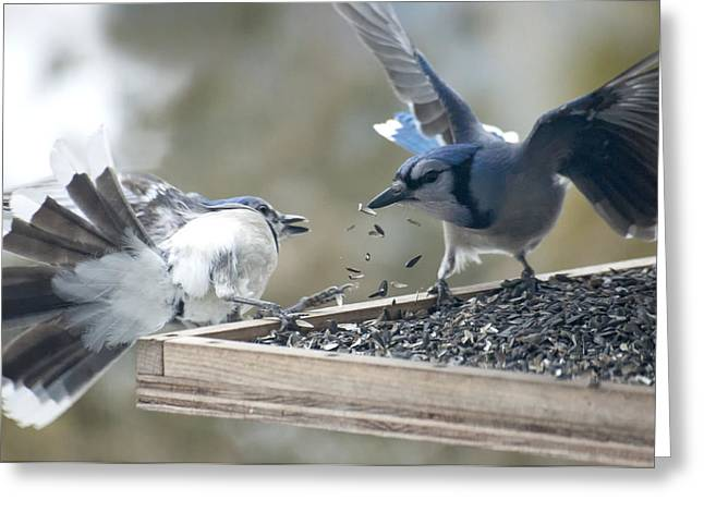 Feeding Birds Photographs Greeting Cards - Squabbling Jays Greeting Card by Ross Powell