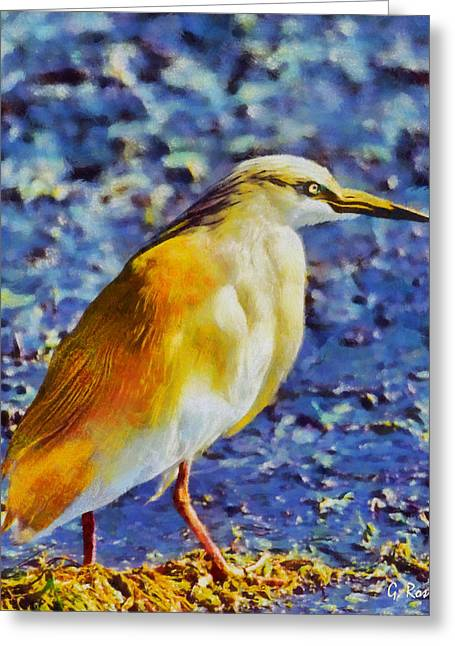 G.rossidis Greeting Cards - Squacco heron Greeting Card by George Rossidis