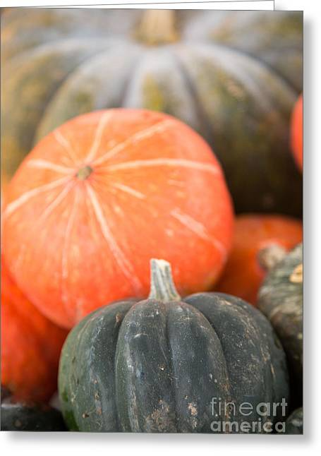 Squash Greeting Cards - Squash and pumpkin Greeting Card by Rebecca Cozart