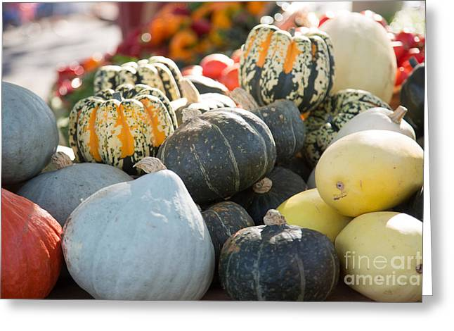 Squash Greeting Cards - Squash Group Greeting Card by Rebecca Cozart