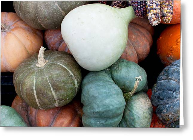 Harvest Greeting Cards - Squash Medley Greeting Card by Indigo Schneider