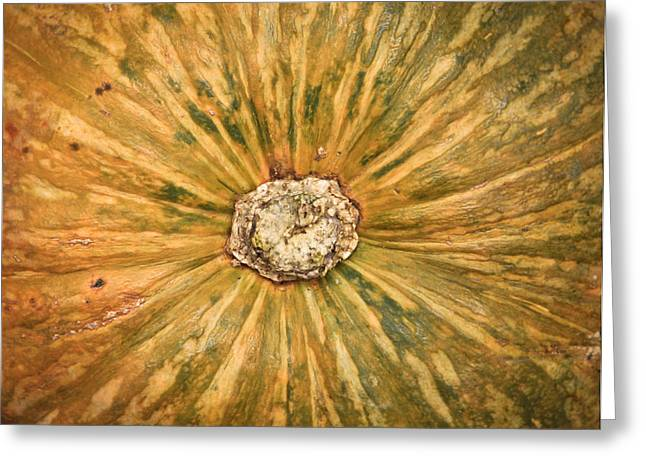 Fibres Greeting Cards - Squash Greeting Card by Tom Gowanlock
