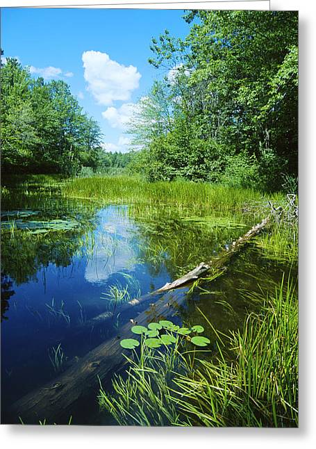 Water Lilies Greeting Cards - Squaw Lake - Northwoods Wisconsin Greeting Card by Bruce Thompson