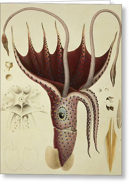 Restaurant Decor Greeting Cards - Squid Greeting Card by A Chazal